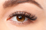 Lash Perfect Treatments